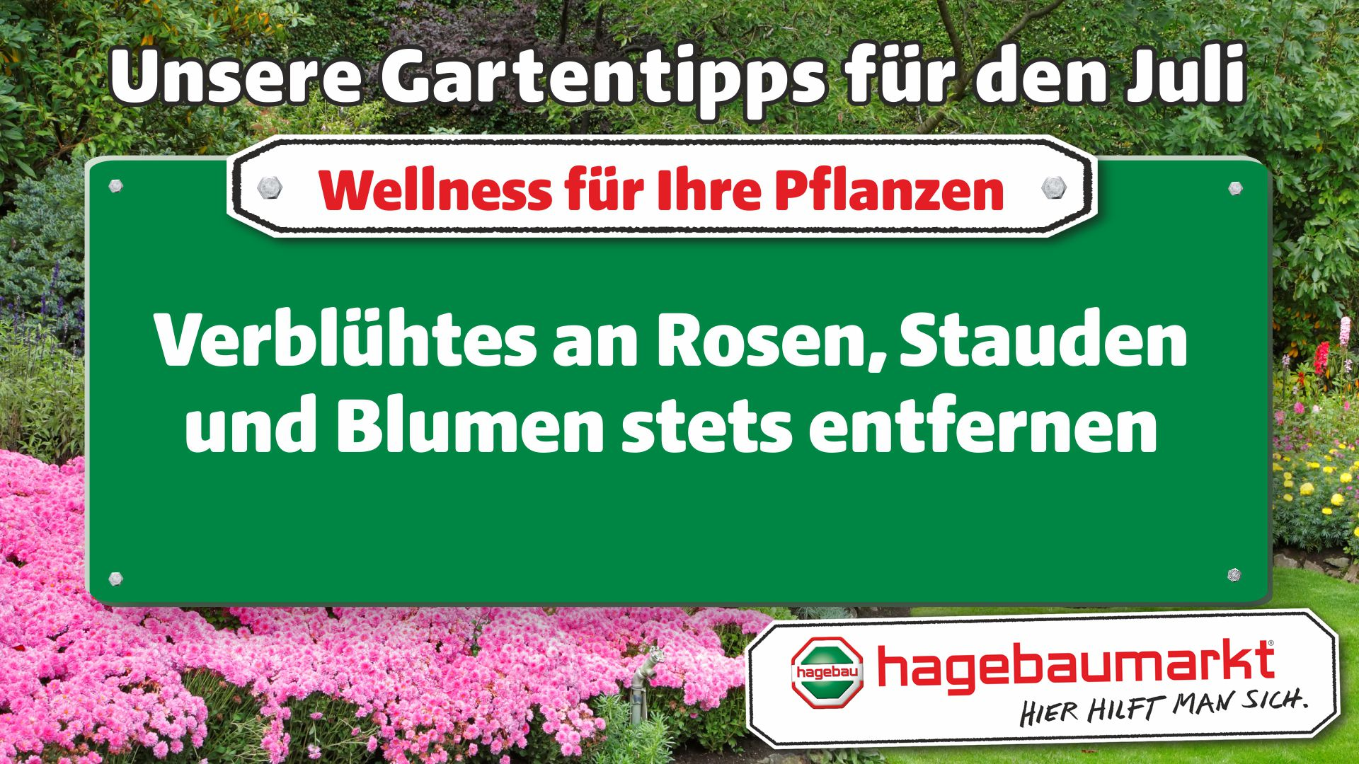 GartenberaterTVWellness1_Juli_1.jpg